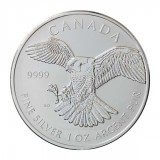 Canadian Silver Falcon 1 oz